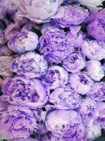 Lavendelmom2021